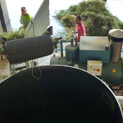 distillation de thym en provence