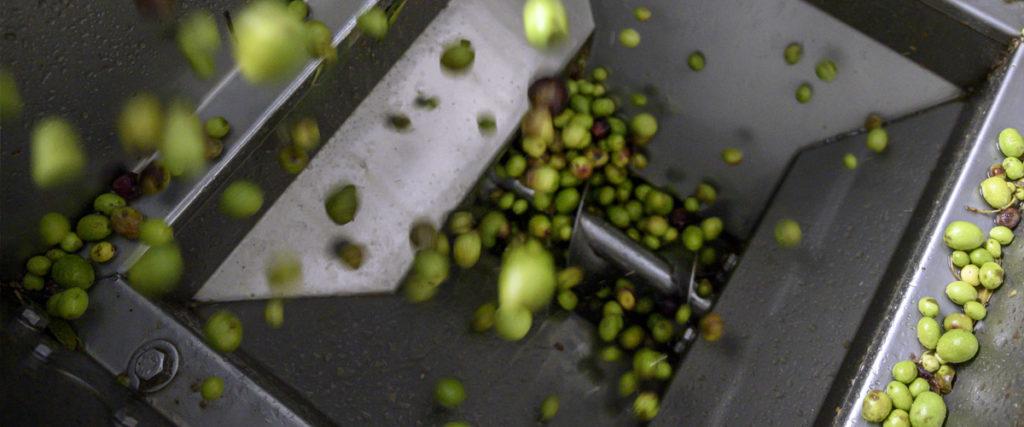 huile-d-olive-bio-valensole