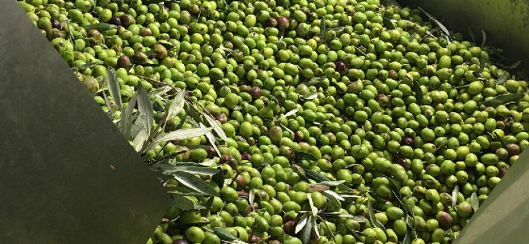 huile-primeur-aop-haute-provence-bio
