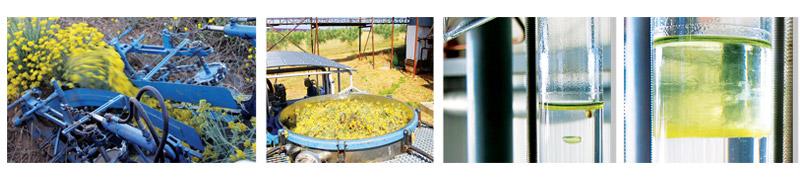 Distillation de huile essentielle d'immortelle à Valensole