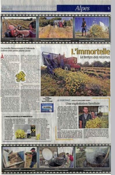 la-provence-juin-2017-helichryse-bio-immortelle