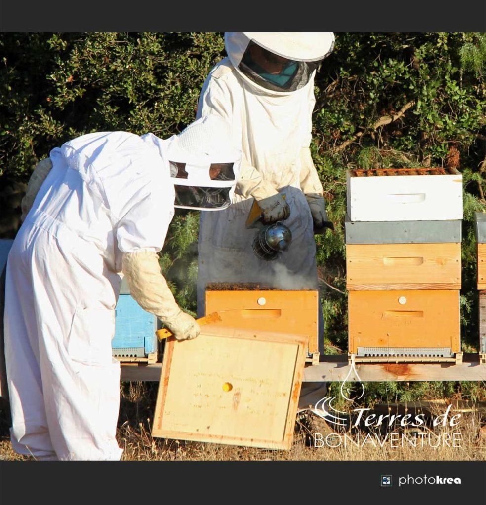 miel-de-lavande-bio-provence-valensole