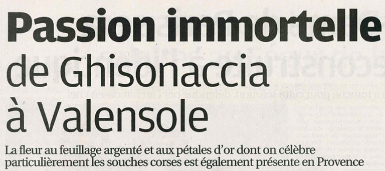 passion immortelle Valensole