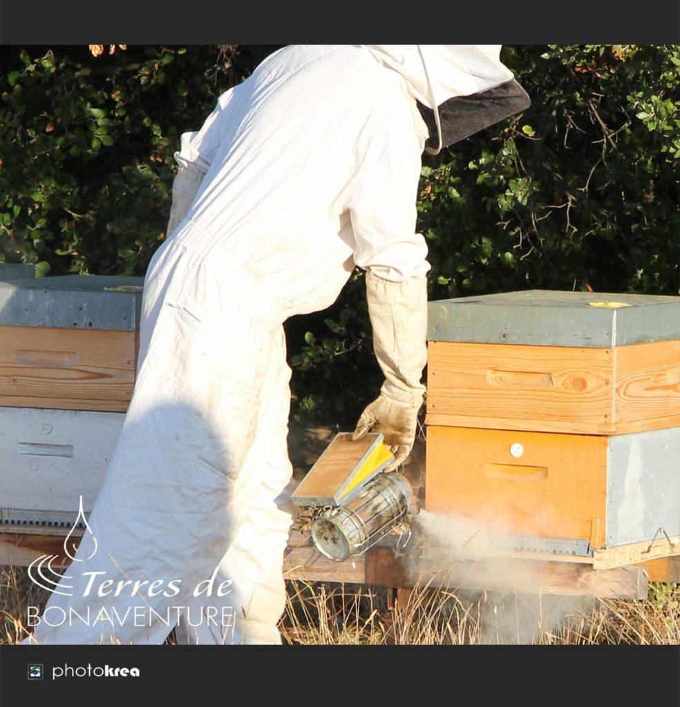recolte-de-miel-de-lavande-bio-valensole