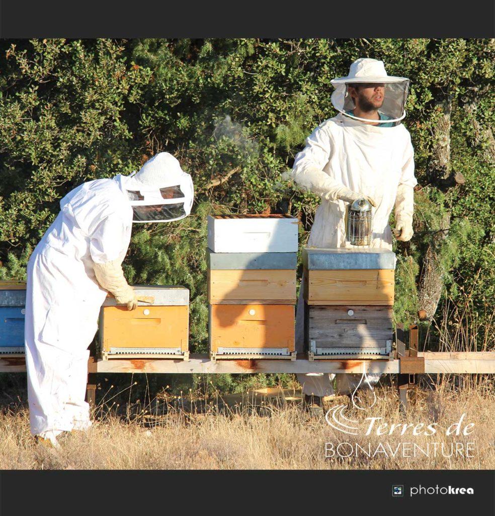 recolte-de-miel-de-lavande-provence
