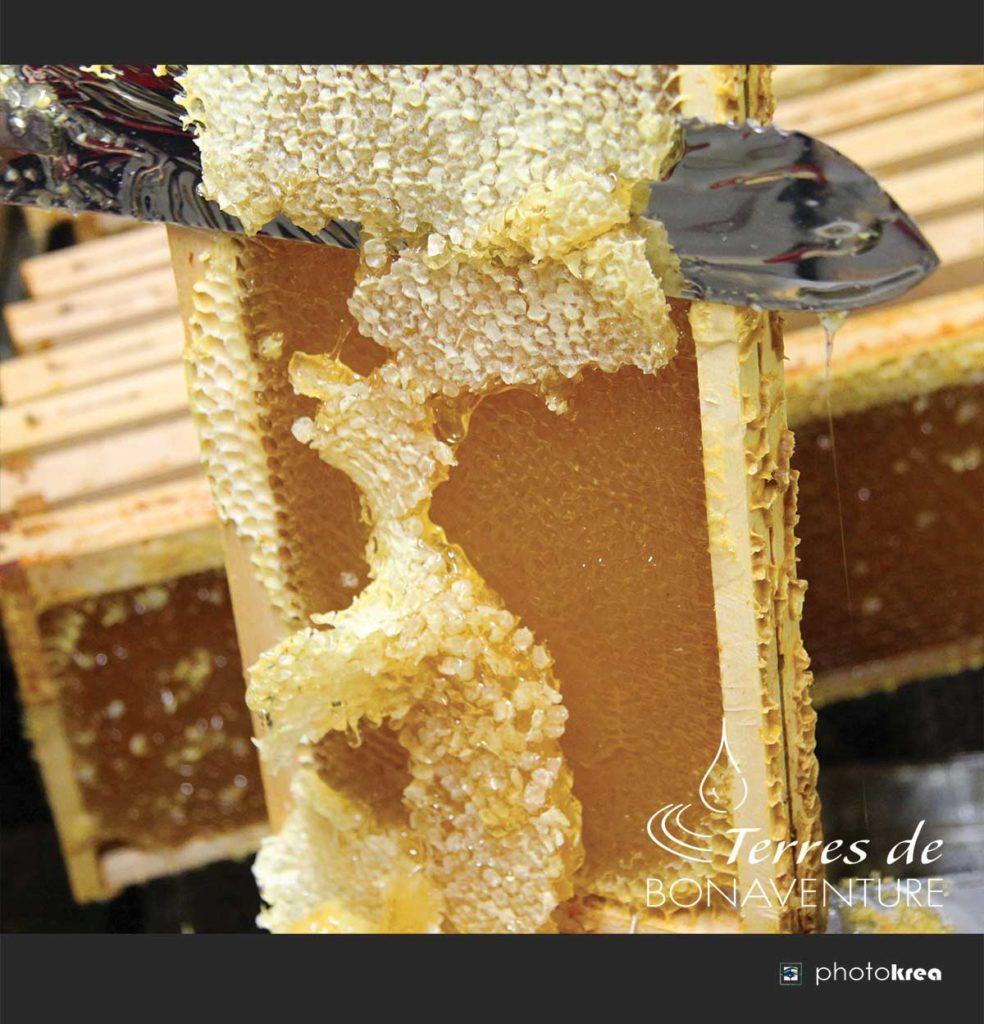 recolte-miel-de-lavande-bio-provence