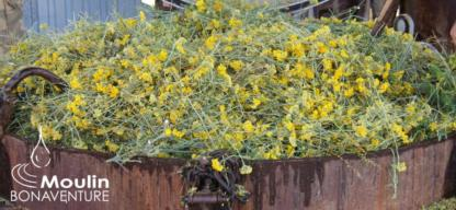 immortelle-helichryse-valensole
