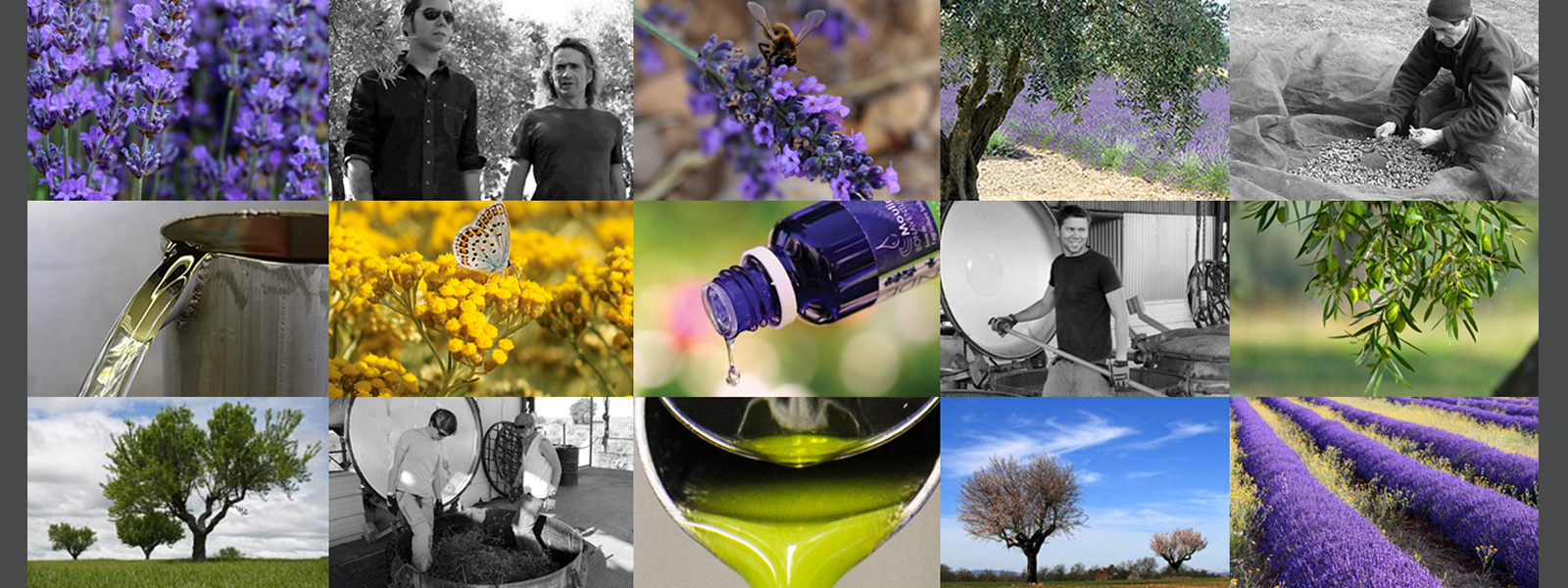 terre de bonaventure Valensole en Provence Huile d'olive - Huiles essentielles  - Amandes - Miel issue de l'agriculture biologique